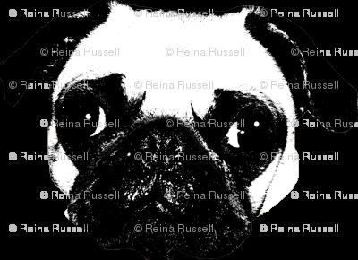 Pug in White
