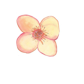 Flower for Spoonflower II