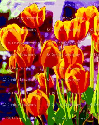 Tulip_Garden_Morning