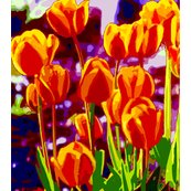 Rrrtulip_garden_morning_shop_thumb