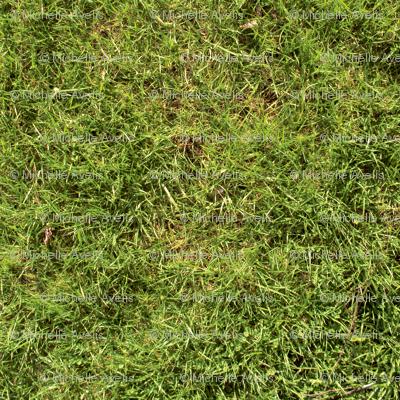 grass_copy