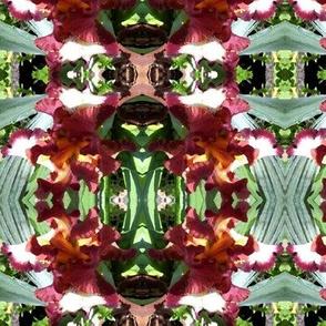 plant Iris a