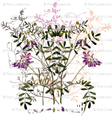 little crown legume