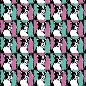 Boston Terriers Rule in Teal and Pink