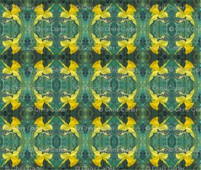 daffodils-mirror-repeat-chris-carter