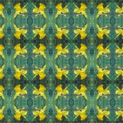 Rdaffodils-mirror-repeat-chris-carter_shop_thumb