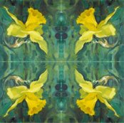 Rdaffodil-close-up-repeat-03-chris-carter_shop_thumb