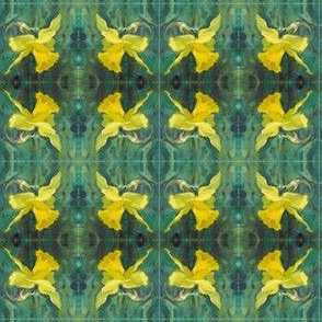 daffodil-close-up-repeat-03-chris-carter