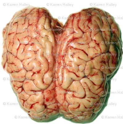 Brain Reign