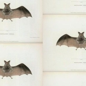 Vintage Printable - Bat zoological illustration