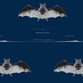 Vintage Printable - Bat zoological illustration- Navy Blue background