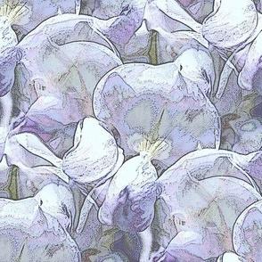 Lavender wisteria