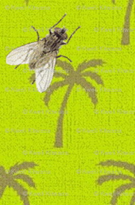Fly on Palms-207