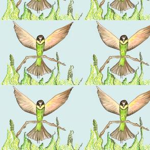 Birds wings