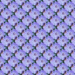 Lilac Cranesbill