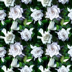 Bloomin' Gardenia