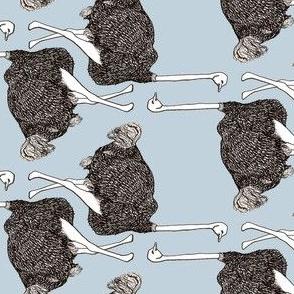 Lady Legs Ostrich
