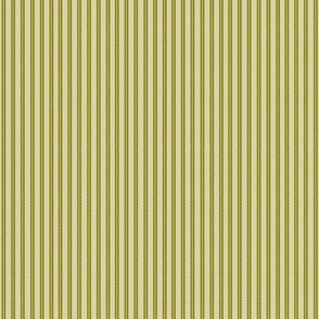 stripe_olive_coord