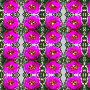 Cactus Flower rad plaid