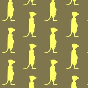 meerkat  yellow brown