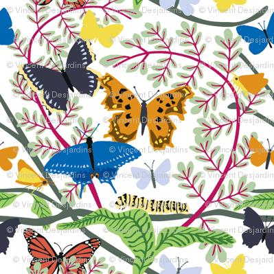 Butterfly_basic_alt_color