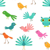 Various Colourful Birds