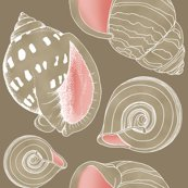 Rrrrrrseashell_sketch_tan4_shop_thumb