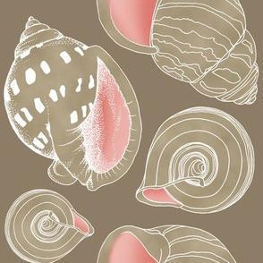 Sketchy Seashells - Blushing Taupe