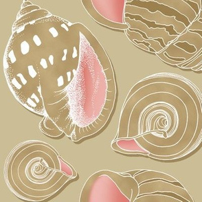 Sketchy Seashells