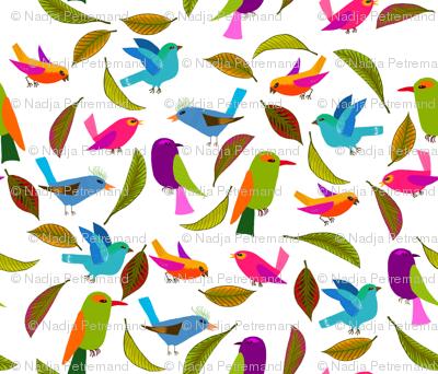 oiseau du paradis L