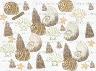 Sea shells / Lt.