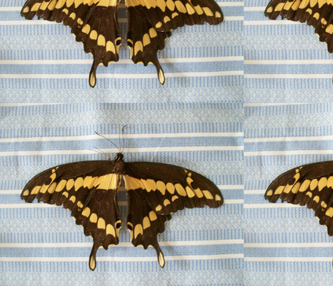 Pure butterfly colors fabric by tea_time_consultants on Spoonflower - custom fabric
