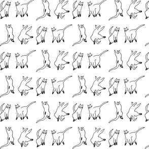 cats-ed2