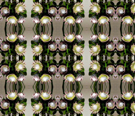 Proteas - wonderful dramatic flowers fabric by engelstudios on Spoonflower - custom fabric