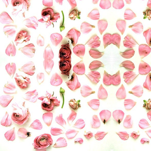 pink petals on white