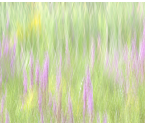 Field_Of_Grass fabric by peter_gonzalez on Spoonflower - custom fabric