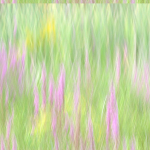 Field_Of_Grass