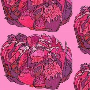fuchsia peony in pink