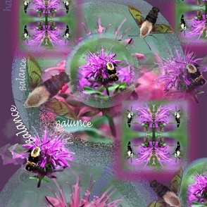Hummingmoth Medicine_