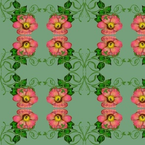 Wild Roses mirrored