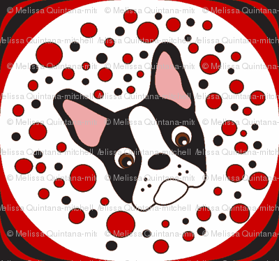 Dottie the  Boston Terrier