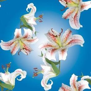 I-spy Lilies