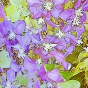 Rrrrrclematis3975_shop_thumb