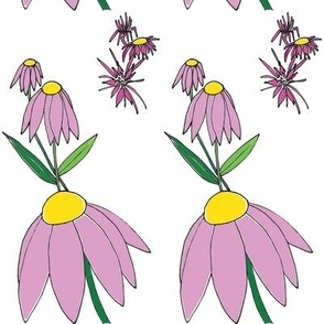 Echinacea Days