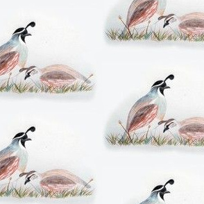 I-Spy quail