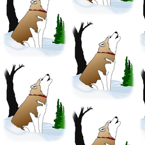 Siberian Husky Red & White howling in the winter woods