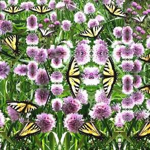 Butterflies in the Chives