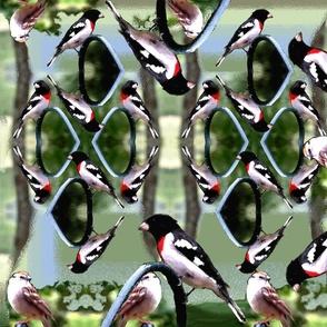 Bird Land