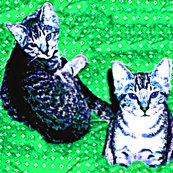 Rdonna_s_cats_2_ed_ed_ed_shop_thumb