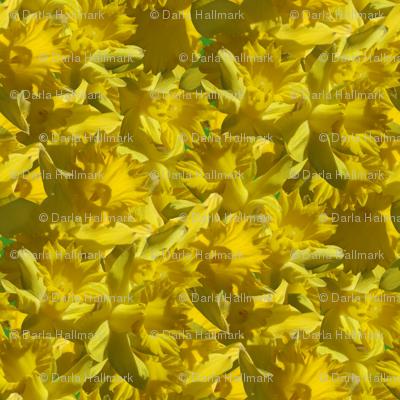 Daffodill delerium